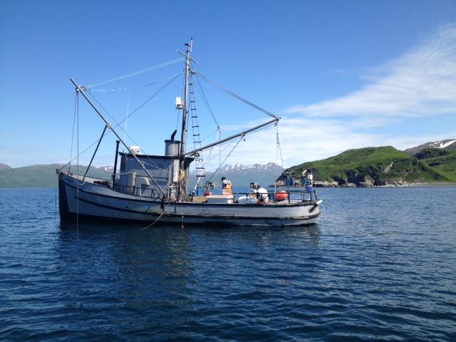Darius F-V Marona off Cape Hepburn, Alitak Bay